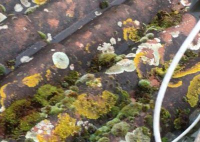 Démoussage toiture à Chasse-sur-Rhône